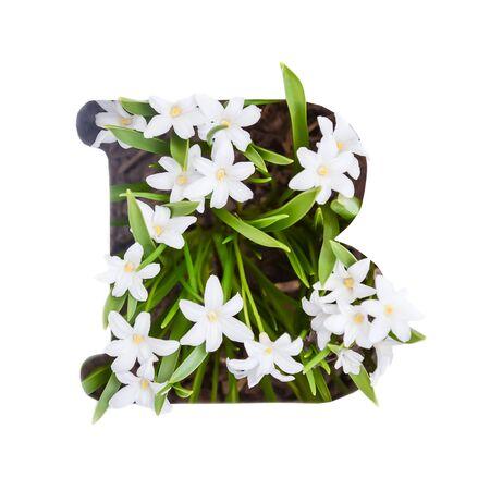 The letter B of the English alphabet of small white chionodoxa flowers Standard-Bild - 125735636