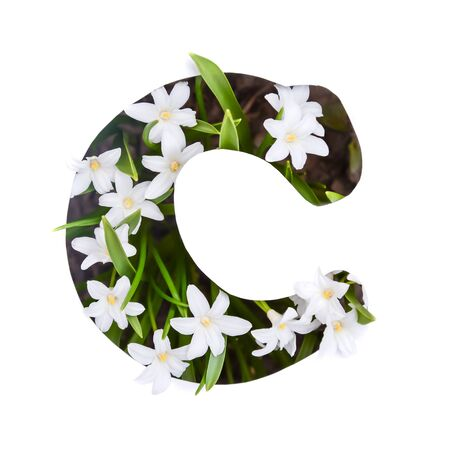 The letter C of the English alphabet of small white chionodoxa flowers Standard-Bild - 125735634
