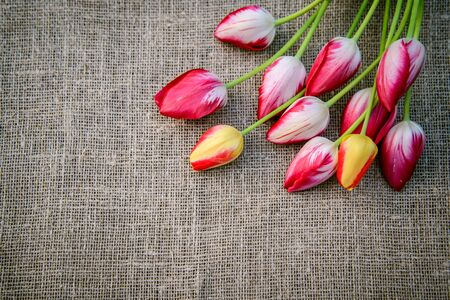 Beautiful bouquet of bright pink and yellow colorful tulips on canvas background, greeting card Standard-Bild - 125735639