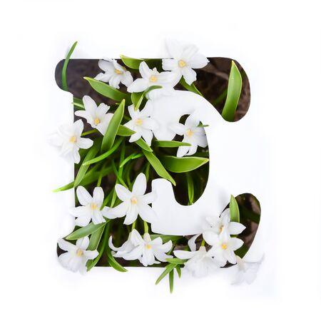 The letter E of the English alphabet of small white chionodoxa flowers Standard-Bild - 125735641