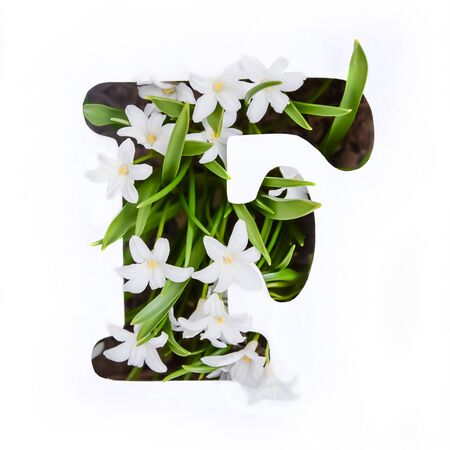The letter F of the English alphabet of small white chionodoxa flowers Standard-Bild - 125735642