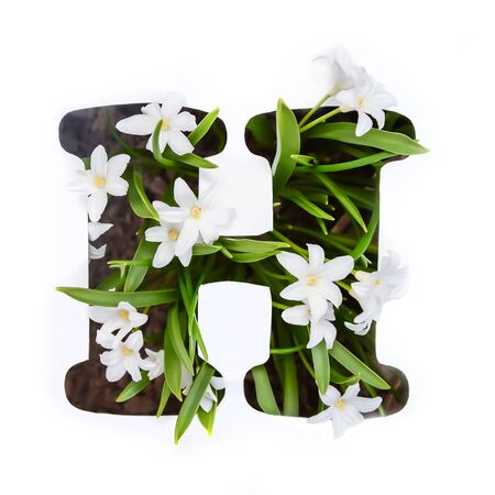 The letter H of the English alphabet of small white chionodoxa flowers Standard-Bild - 125735677