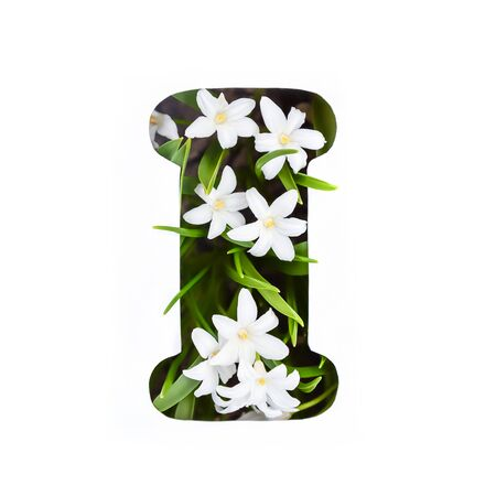 The letter I of the English alphabet of small white chionodoxa flowers Standard-Bild - 125735678