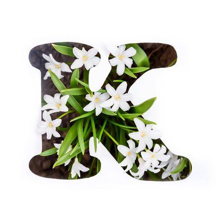 The letter K of the English alphabet of small white chionodoxa flowers Standard-Bild - 125735680