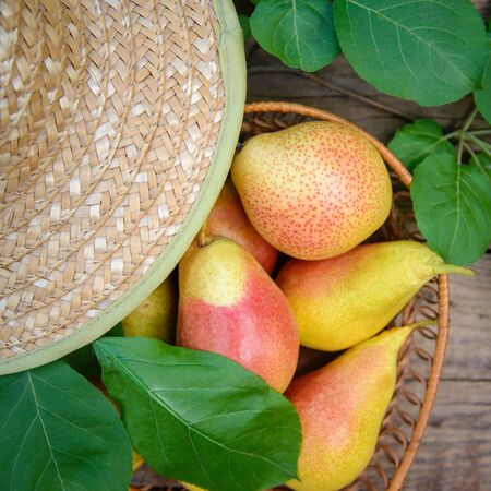 Harvest of ripe yellow-red pears in a wicker dish on a wooden background, closeup Standard-Bild - 125735681