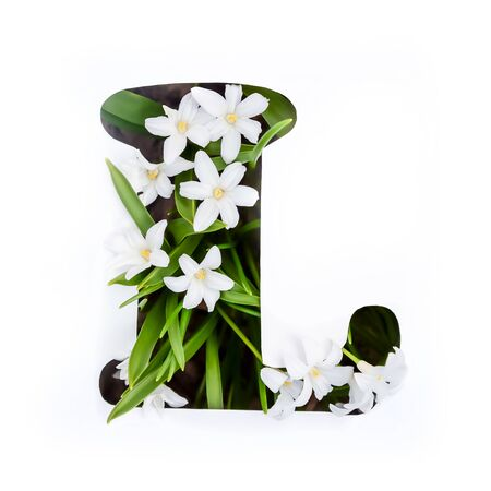 The letter L of the English alphabet of small white chionodoxa flowers Standard-Bild - 125735682