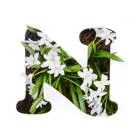 The letter N of the English alphabet of small white chionodoxa flowers Standard-Bild - 125735687