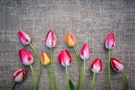 Beautiful bouquet of bright pink and yellow colorful tulips on canvas background with copy space Standard-Bild - 125735690