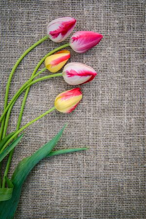Beautiful bouquet of bright pink and yellow colorful tulips on canvas background with copy space Standard-Bild - 125735691