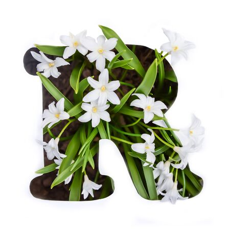 The letter R of the English alphabet of small white chionodoxa flowers Standard-Bild - 125735746
