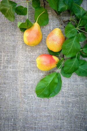 Harvest of ripe yellow-red pears in a wicker dish on a burlap background with a copy of space Standard-Bild - 125735751