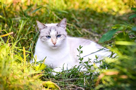 White cute cat lying in the green grass in the sunlight in the garden in summer Standard-Bild - 125735758