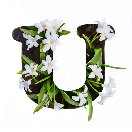 The letter U of the English alphabet of small white chionodoxa flowers Standard-Bild - 125735761