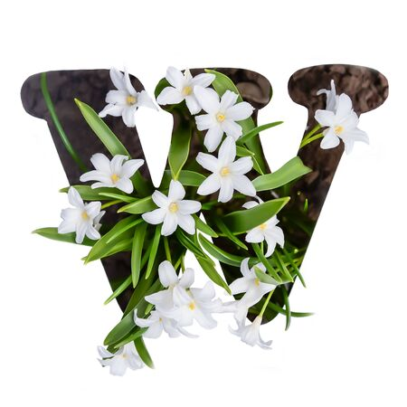 The letter W of the English alphabet of small white chionodoxa flowers Standard-Bild - 125735826