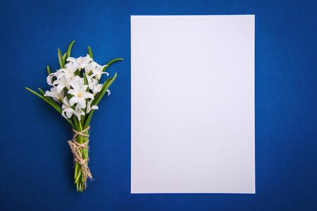 Bouquet of white flowers Chionodoxa and a blank sheet of paper on a blue background, top view, with copy space Standard-Bild - 125735824