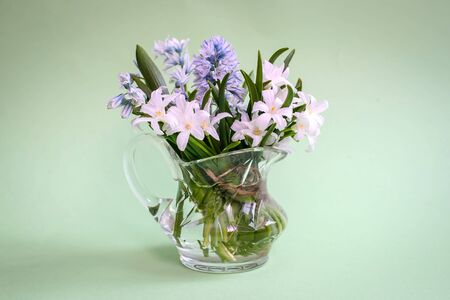 Bouquet of white spring flowers Chionodoxa in a small glass vase on a green background with copy space Standard-Bild - 125735828