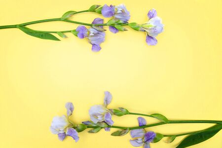 Purple irises on a yellow background, mockup for greeting cards, top view, copy space Standard-Bild - 126265842