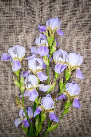 Beautiful purple flowers irises on a gray canvas background, top view Standard-Bild - 127655749