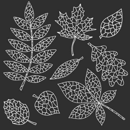 White outline of abstract autumn leaves on dark grey, black background