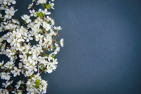 White plum blossom branch on dark background with copy space