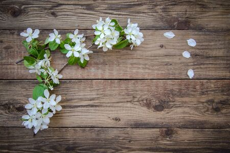 Spring branches of a blooming apple tree with white flowers on a rustic wooden background, with a copy space for the text