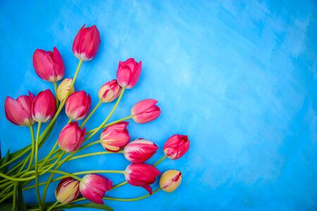 Bouquet of red and pink tulips on a blue background, copy space, for greeting card design