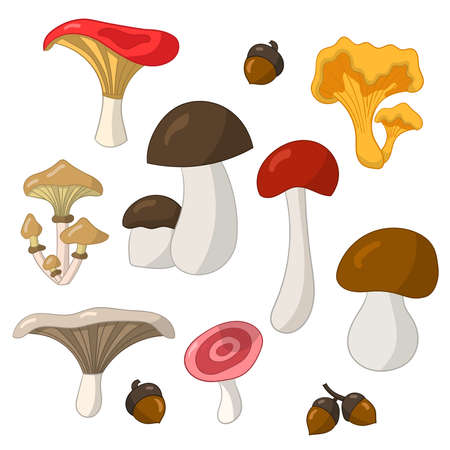 Vector set with colorful edible mushrooms on a white background
