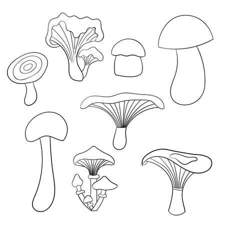 Vector set with edible mushrooms, coloring page