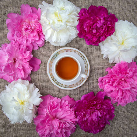 Cup of tea surrounded by white and pink peony flowers on a canvas background Reklamní fotografie