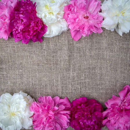 Pink and white peonies on canvas background, burlap, copy space for text