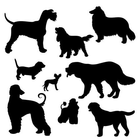 Vector set with black silhouettes of dogs of different breeds: Scottish shepherd collie, St. Bernard, Labrador, Cocker Spaniel, Basset hound, poodle, Afghan hound, toy Terrier, riesenschnauzer on a white background Vecteurs