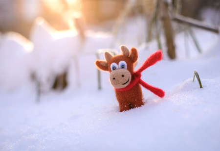 Symbol of 2021, a toy felt brown bull in a red scarf in the snow on a sunny winter day 스톡 콘텐츠