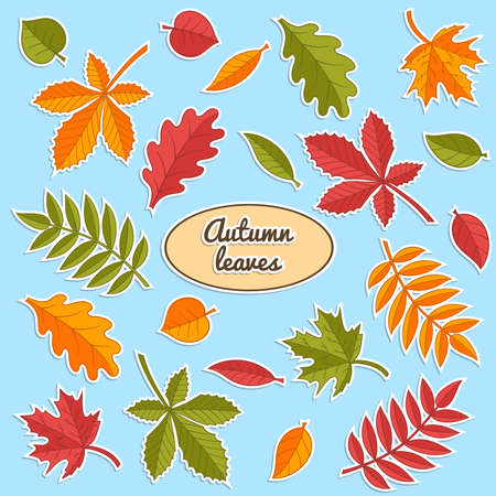 Vector set of stickers with bright autumn leaves of oak, maple, chestnut, birch, mountain ash. For design and decoration