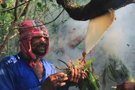 labouring: Mawal Locally known as Honey collectors break a honeycomb to get honey in the Sundarbans, a UNESCO World Heritage Site and a wildlife sanctuary.