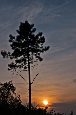tree and sunset at Phu-Chi-fah photo