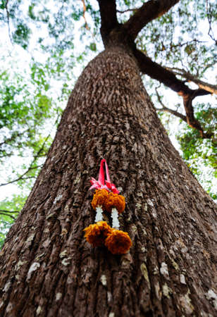 chaplet: chaplet on the trees Thai poeple believe in forest Stock Photo
