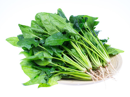 Spinach 스톡 콘텐츠