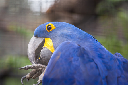 Macaw close up view Stock Photo - 85799579