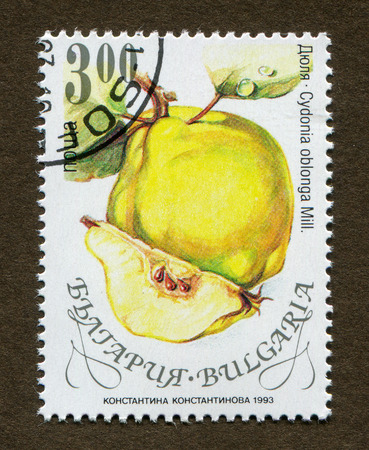 Bulgaria stamp no circa date: A stamp printed in Bulgaria shows Quince illustration.
