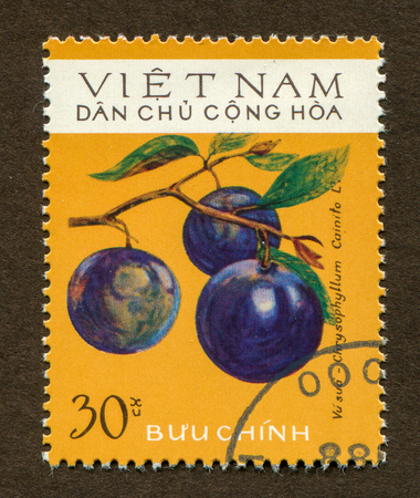 Vietnam stamp a stamp printed in Vietnam shows Chrysophyllum cainito illustration.