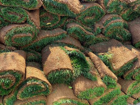 Turf roll close up