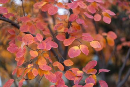 Autumn red leaves close-up background 写真素材 - 140093780