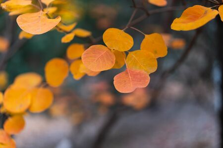 Autumn red leaves close-up background 写真素材