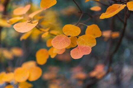 Autumn red leaves close-up background 写真素材 - 140093781