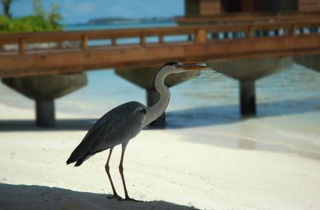 seabird: seabird