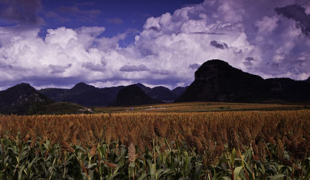 nature scenery: Nature scenery of Red Sorghum