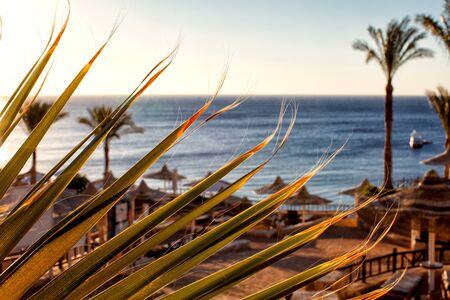 el sheikh: Parasols at Red Sea. Sharm El Sheikh