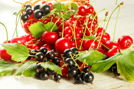 Fresh berries of cherry, red currant and black currant Imagens