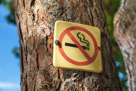 The no smoking icon is attached to a tree trunk in a park against a blue sky Stockfoto