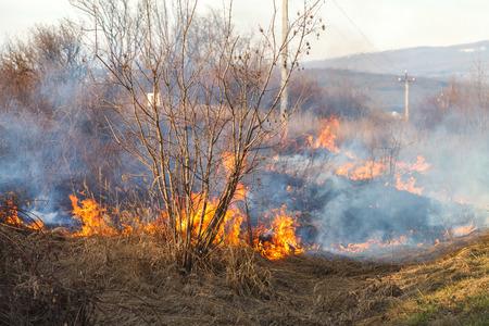 In het vroege voorjaar verspreidt het vuur zich door droge vegetatie en verbrandt alles op zijn pad. Zware rook en grote branden schaden de landbouw en veroorzaken milieuschade. Stockfoto